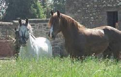 112/horses_0002.jpg